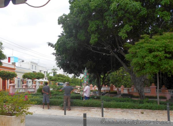 The bottle tree in Parque Rosado