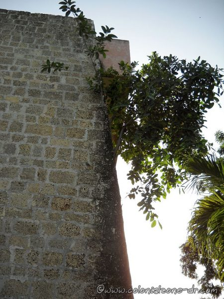 Tree growing out of the wall of the structure July 21, 2013