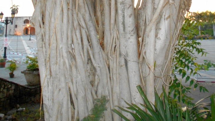 tree-roots-plaza-espana-02-9-18-2015-cut