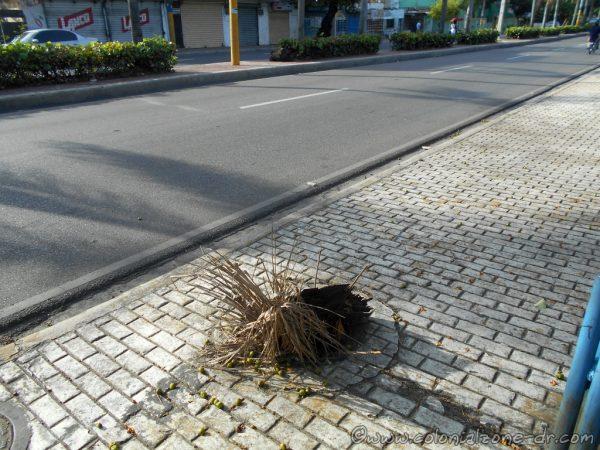Palm branches fill open man hole on Ave. España, Villa Duarte, Dominican Republic.